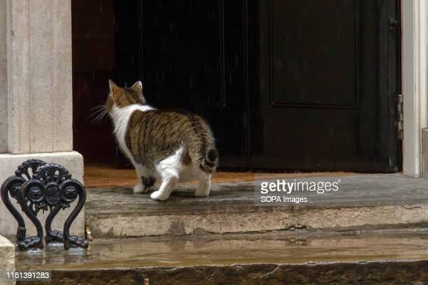 Larry, the 10 Downing Street cat and Chief Mouser to the Cabinet Office seems to decide the weather is not for him, and he heads back inside the...