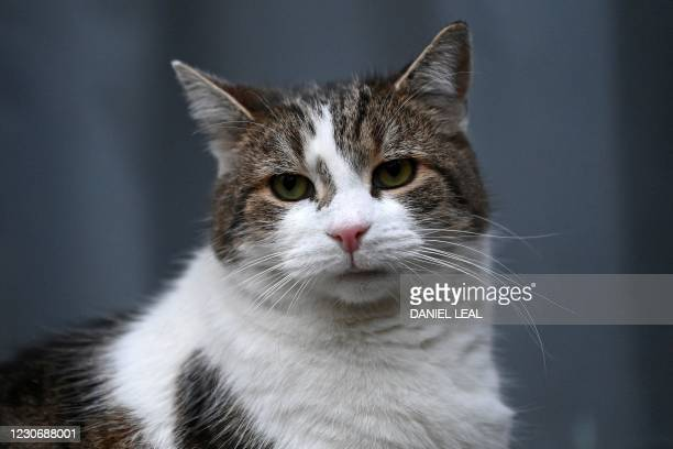 Larry the 10 Downing Street cat is pictured in Downing Street in central London on january 20, 2021.