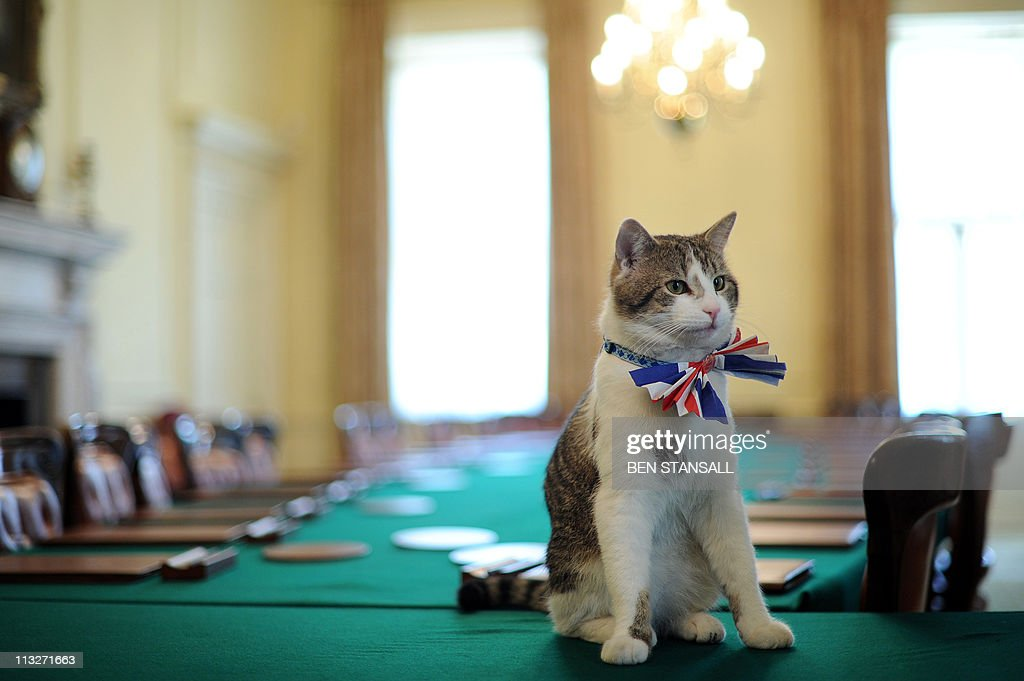 Larry, the 10 Downing Street cat, sits o : News Photo