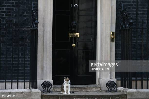 Larry the 10 Downing Street cat sits on the step outside 10 Downing Street in central London on July 13 2016 after new British Prime Minister Theresa...