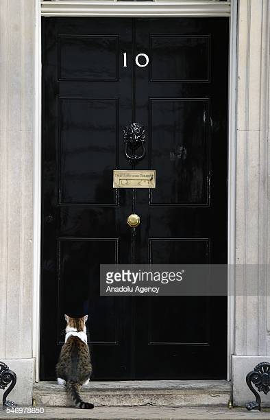 Larry the 10 Downing Street cat sits outside the 10 Downing Street on July 13 2016 in London England