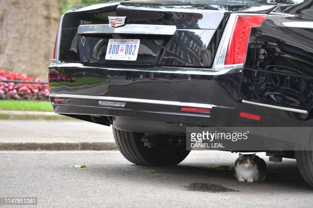 Larry the 10 Downing Street cat sits underneath The Beast, the armoured Cadillac of US President Donald Trump, in Downing Street in London on June 4...