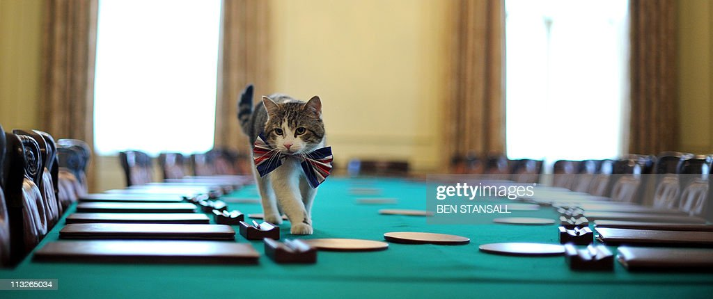 Larry, the 10 Downing Street cat, walks : News Photo