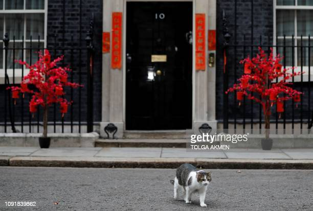Larry the 10 Downing Street cat walks past decorations on the door of number 10 in central London on January 31 ahead of an event to celebrate Lunar...