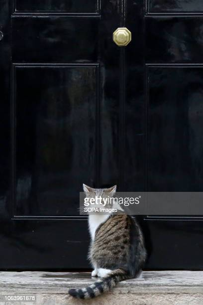 Larry the cat and Chief Mouser to the Cabinet Office is seen seated on the steps at No 10 Downing Street just before the Cabinet Ministers start...
