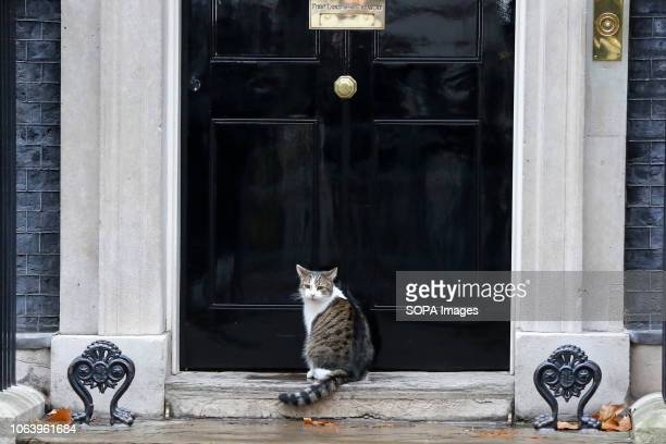 Larry, the cat and Chief Mouser to the Cabinet Office is seen seated on the steps at No 10 Downing Street just before the Cabinet Ministers start...