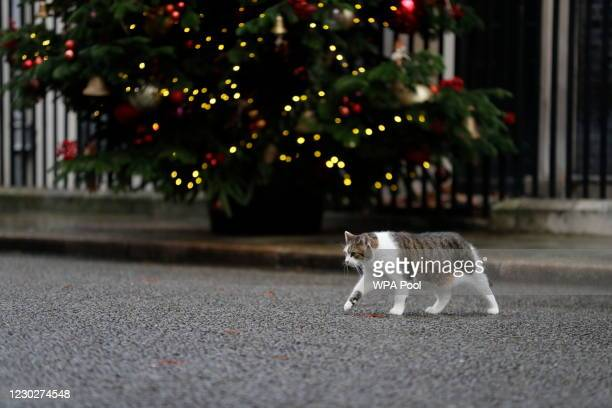 Larry the cat, Chief Mouser to the Cabinet Office walk on Downing Street, outside the entrance to No10 as Britain's Health Secretary, Matt Hancock,...