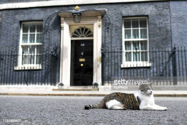 Larry the Cat is pictured at 10 Downing Street, London on July 10, 2019.
