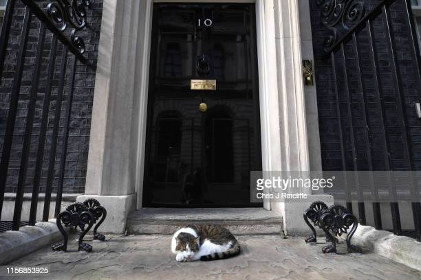 Larry the Cat lays on the step of Number Ten as government ministers meet to discuss the deepening Iran crisis in Downing Street on July 20 2019 in...