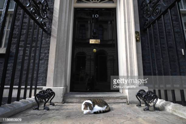 Larry the Cat lays on the step of Number Ten as government ministers meet to discuss the deepening Iran crisis in Downing Street on July 20, 2019 in...