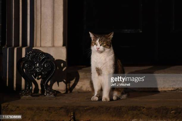 Larry the cat sits on the step of Number 10 Downing Street as the Prime Minister Boris Johnson appoints his cabinet on July 24 2019 in London England...