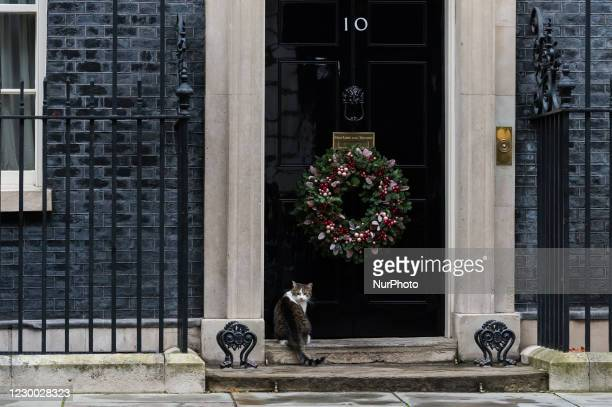 Larry the cat sits outside 10 Downing Street in central London on 09 December, 2020 in London, England. Boris Johnson is due to travel to Brussels...