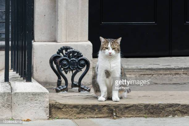 Larry the cat sits outside 10 Downing Street in central London on 16 September, 2020 in London, England.