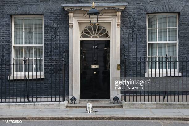 Larry, the cat sits outside the front door of 10 Downing street, London on March 25, 2019. - British Prime Minister Theresa May will today chair a...
