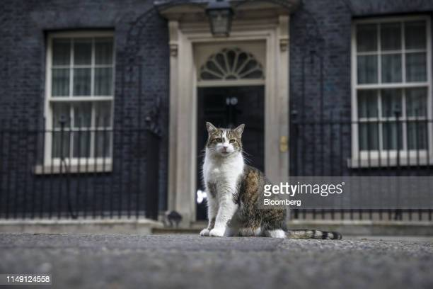 Larry, the Downing Street cat, a brown and white tabby re-homed from Battersea Dogs and Cats Home, stands in the road outside at number 10 Downing...