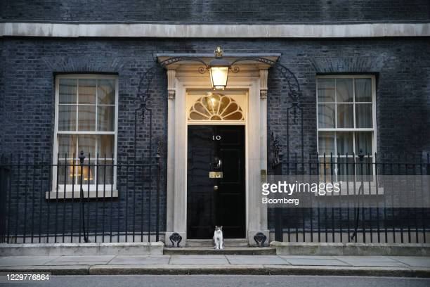 Larry, the Downing Street cat, a brown and white tabby re-homed from Battersea Dogs and Cats Home, on the doorstep of number 10 Downing Street ahead...