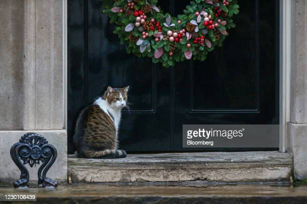Larry, the Downing Street cat, a brown and white tabby re-homed from Battersea Dogs and Cats Home, under the Christmas wreath on the step at 10...