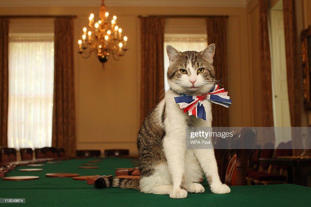 Larry, the Downing Street cat, gets in the Royal Wedding spirit in a Union flag bow-tie in the Cabinet Room at number 10 Downing Street on April 28, 2011 in London, England. Prince William will marry his fiancee Catherine Middleton at Westminster Abbey tomorrow.