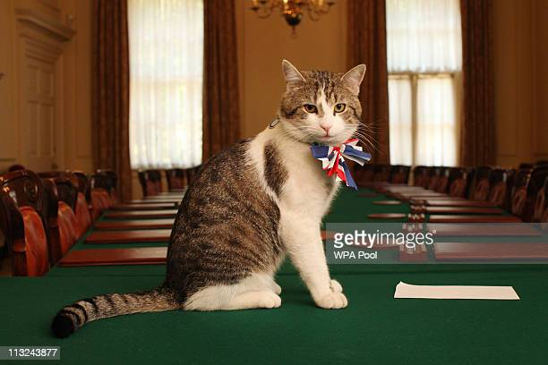 Larry, the Downing Street cat, gets in the Royal Wedding spirit in a Union flag bow-tie in the Cabinet Room at number 10 Downing Street on April 28,...