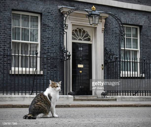 Larry the Downing Street cat outside No.10 Downing Street. 4 June 2019, London, England.