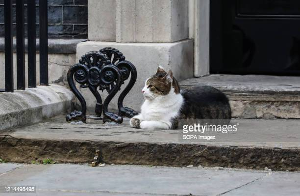 Larry the Downing Street cat outside Number 10 during the 'The Clap For Our Carers'.