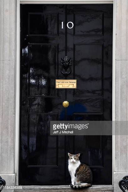 Larry the Downing Street cat sits at the door step of Number Ten on June 7, 2019 in London, England. Today is Theresa May's last day as Conservative...