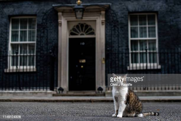 Larry, the Downing Street cat, sits in the street as ministers attend a cabinet meeting at 10 Downing Street on June 11, 2019 in London, England....