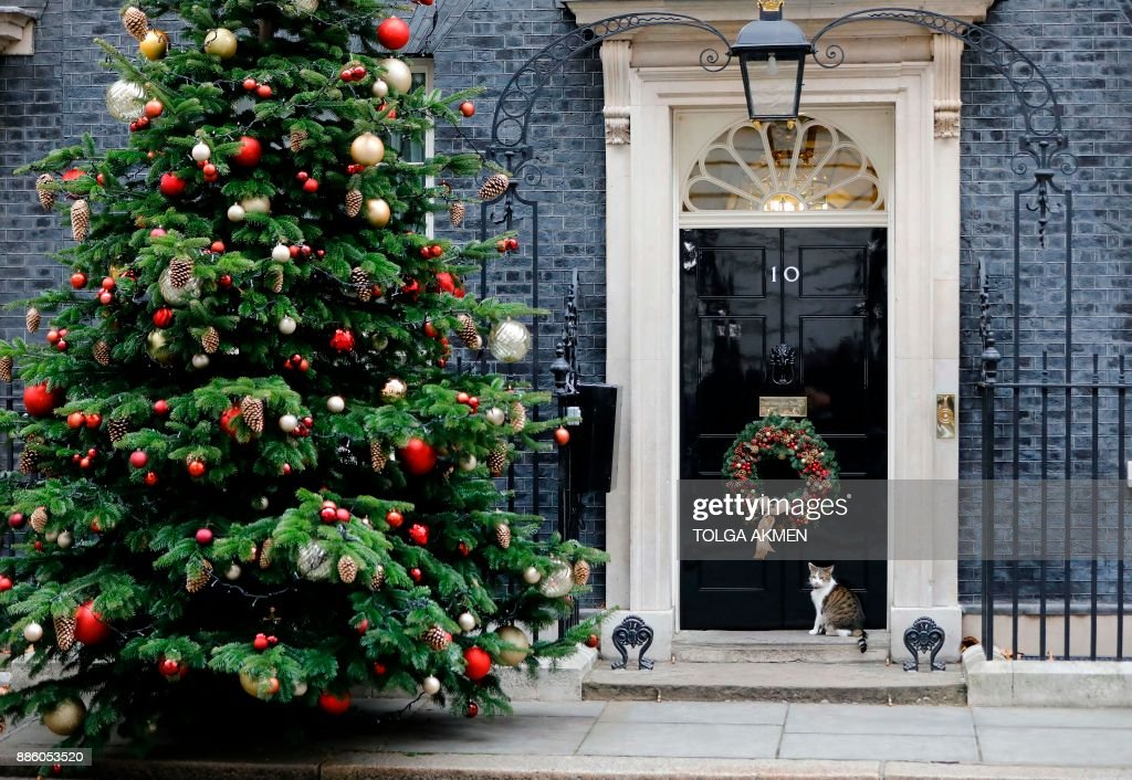 Larry the Downing Street cat, sits near the Christmas tree outside 10 Downing Street in central London on December 5, 2017. Britain and the EU failed to strike a Brexit divorce deal after a dispute over the Irish border scuppered talks in Brussels on Monday, but both said they were confident of reaching an agreement later this week. / AFP PHOTO / Tolga AKMEN