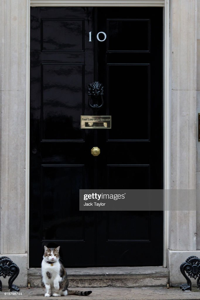 Larry the Downing Street cat sits on the doorstep of Number 10 Downing Street on February 8, 2018 in London, England. British Prime Minister Theresa May hosts Japanese business leaders for a roundtable discussion today as the government seeks investment from other countries as Brexit negotiations continue.