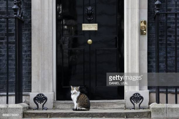 'Larry' the Downing Street cat sits on the steps of number 10 the official residence of Britain's Prime Minister Theresa May in central London on...