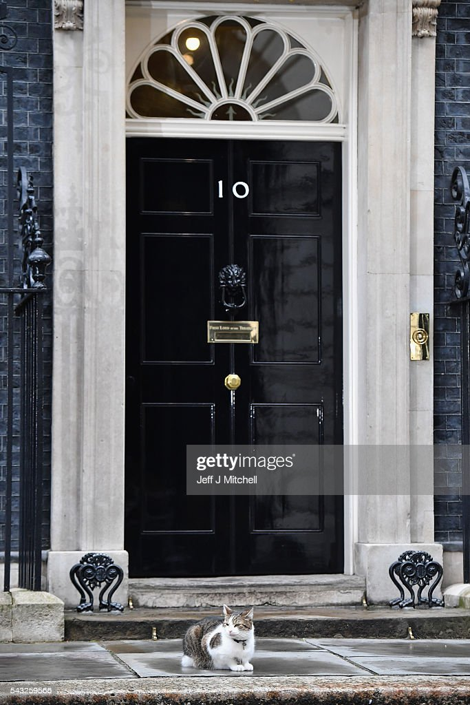 Larry the Downing Street cat sits outside number ten Downing Street on June 27, 2016 in London,England.Chancellor George Osborne will today issue a statement in a bid to calm the financial markets amid the uncertainty sparked by the UK voting to leave the EU.