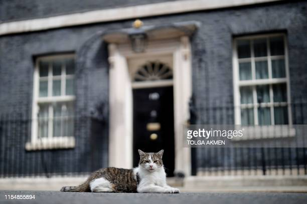 Larry, the Downing Street cat, sits outside the front door of 10 Downing Street in London on July 10, 2019.