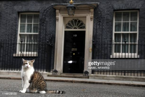 Larry the Downing Street cat sits outside the front door of 10 Downing Street London on June 11 2019 Ten Conservative MPs gathered enough support to...