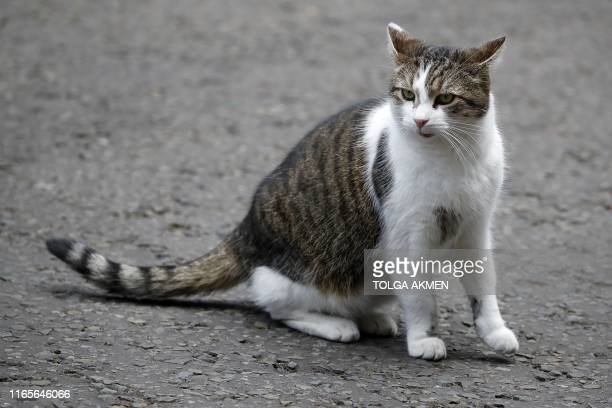Larry, the Downing Street cat, sits outside the front door of 10 Downing Street, the official residence of Britain's Prime Minister, in London on...