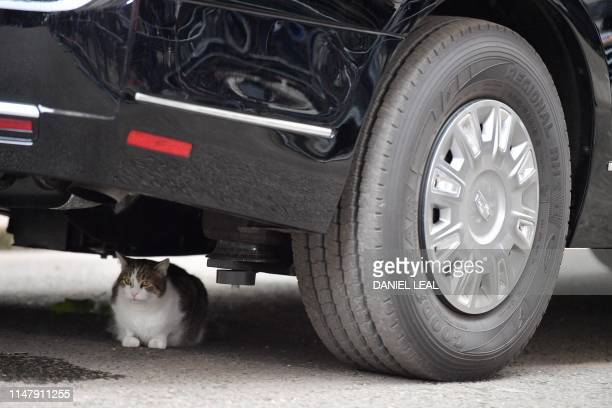 Larry the Downing Street cat sits underneath The Beast, the armoured Cadillac of US President Donald Trump, in Downing Street in London on June 4 on...