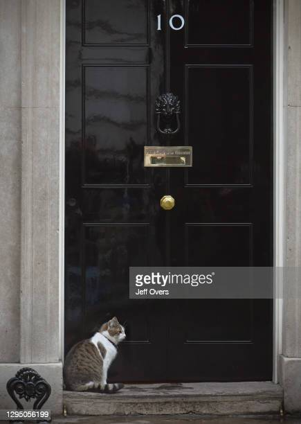 Larry the Downing Street cat sitting on the doorstep of 10 Downing Street, on the 3rd August 2017, in London, United Kingdom.