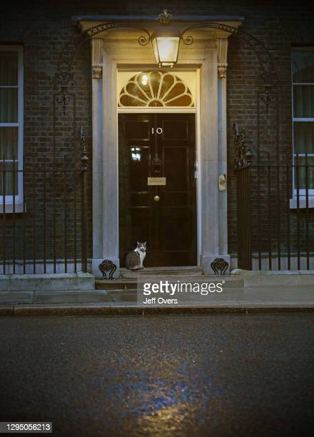 Larry the Downing Street cat sitting on the doorstep of 10 Downing Street, on August 3rd 2017, in London, United Kingdom.