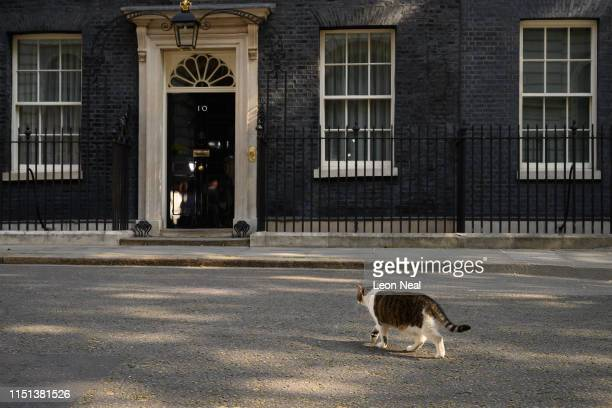 Larry the Downing Street cat walks towards the door of number 10 before Prime Minister Theresa May makes a statement outside 10 Downing Street on May...