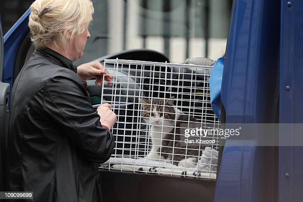 Larry' the new Downing Street cat, from Battersea Dogs and Cats Home in London arrives at 10 Downing Street, on February 15, 2011 in London, England....