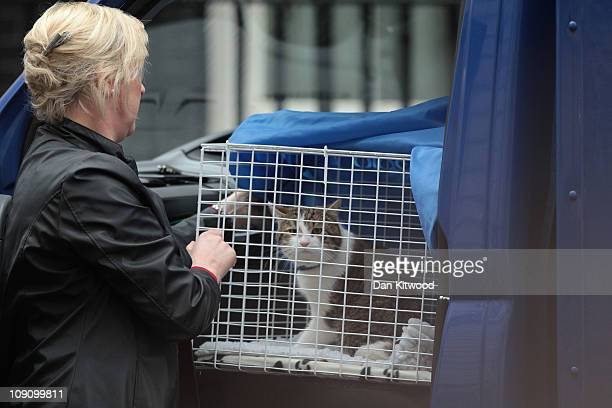 Larry', the new Downing Street cat, from Battersea Dogs and Cats Home in London, arrives at 10 Downing Street, on February 15, 2011 in London,...