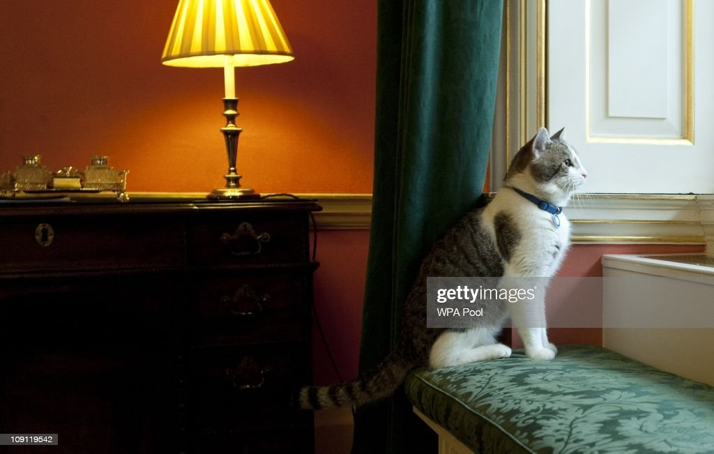 'Larry', the new Downing Street cat, gazes through a window of Number 10 Downing Street on February 15, 2011 in London, England. It is hoped that British Prime Minister David Cameron's newest team member Larry, will dispense of a rat that has been spotted scuttling past the famous door of Number 10 Downing Street in recent weeks.