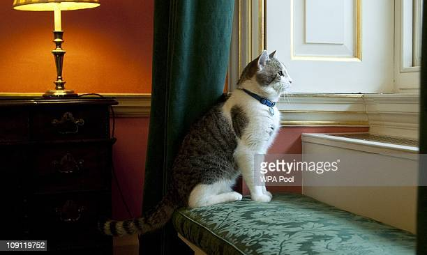Larry', the new Downing Street cat, gazes through a window of Number 10 Downing Street on February 15, 2011 in London, England. It is hoped that...