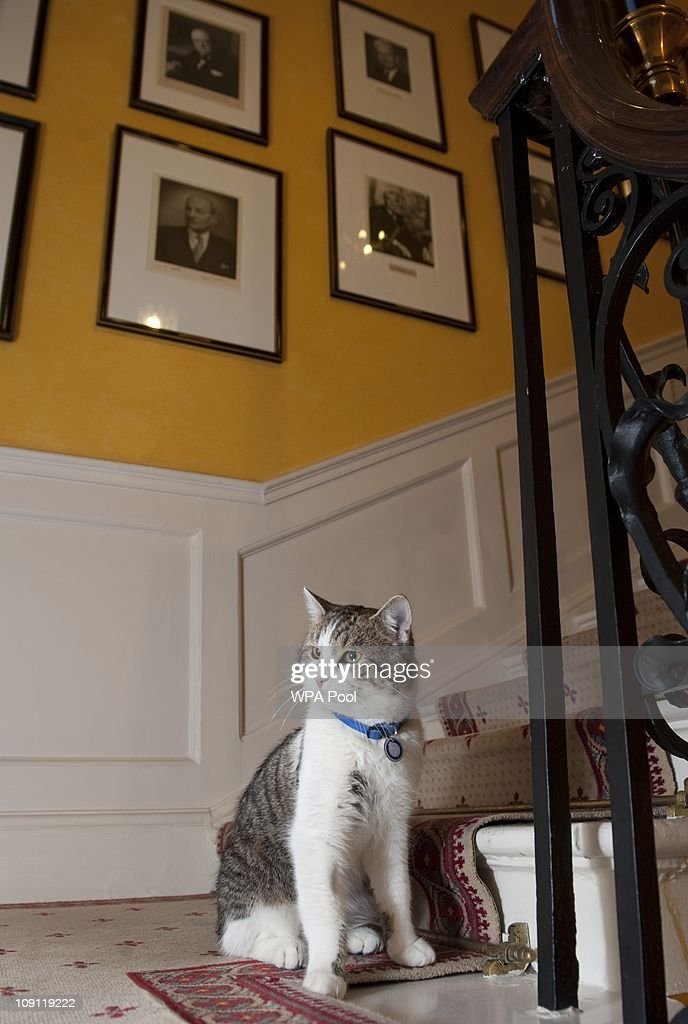 'Larry', the new Downing Street cat, on the stairs of Number 10 Downing Street on February 15, 2011 in London, England. It is hoped that British Prime Minister David Cameron's newest team member Larry, will dispense of a rat that has been spotted scuttling past the famous door of Number 10 Downing Street in recent weeks.