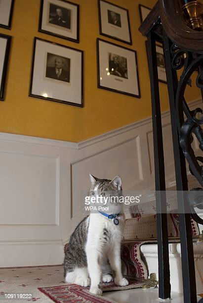 Larry', the new Downing Street cat, on the stairs of Number 10 Downing Street on February 15, 2011 in London, England. It is hoped that British Prime...