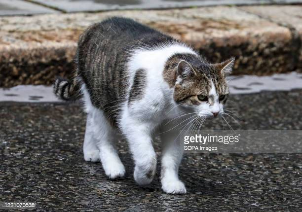 Larry, the No 10 Downing Street cat and Chief Mouser to the Cabinet Office out and about in Downing Street.