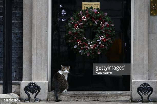 Larry, the number 10 Downing Street cat, sits in front of the annual Christmas decorations on December 29, 2020 in London, England.