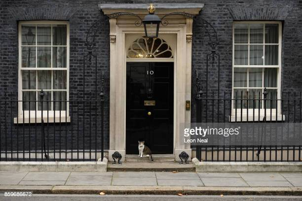 Larry the Number 10 house cat sits on the step in Downing Street, during a Cabinet meeting on October 10, 2017 in London, England. The meeting was...