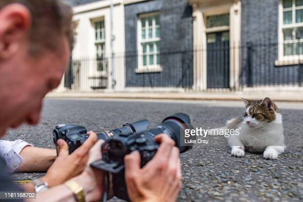 Larry the resident 10 Downing Street cat is seen sunning himself in Downing Street on July 10 2019 in London England