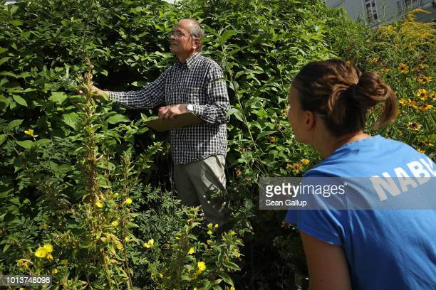 Lars Friman and Daniela Franzisi both from NABU Germany's biggest NGO for conservation and the study of nature inspect an urban garden for insects...