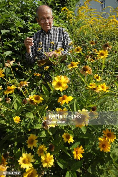 Lars Friman of NABU Germany's biggest NGO for conservation and the study of nature inspects an urban garden for insects while participating in NABU's...